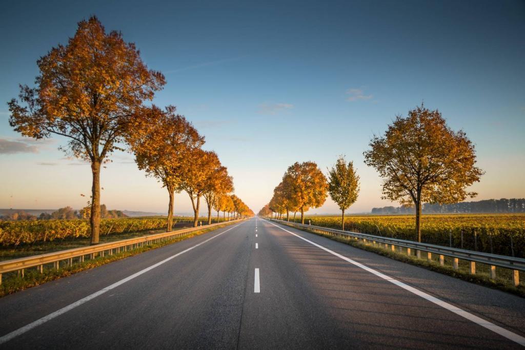 Long Leafy Road